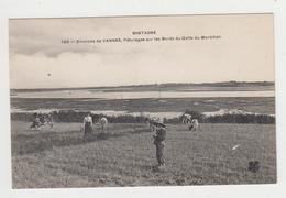 AC553 - Environs De VANNES - Pâturages Sur Les Bords Du Golfe Du Morbihan - Vannes
