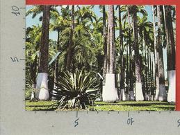 CARTOLINA VG COSTA RICA - LIMON - Hermosa Vegetacion De Parque Vargas - 10 X 15 - 1987 - Costa Rica