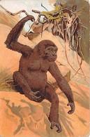 Animaux - N°63695 - Singe - Souvenir De Zoo-Circus - Monkeys