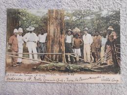 CPA Congo Boma Crocodile Colorisée 1907 - Belgian Congo - Other