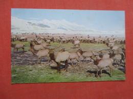 National Elk Refuge Jackson Hole Wyoming > Ref  3865 - Dieren