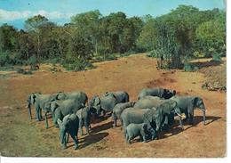 CARTOLINA KENIA 1972 - ELEFANTI  TREETOPS - NYERI - VIAGGIATA DAL KENIA ALL'ITALIA - Kenia