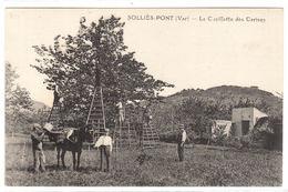 CULTURE DES FRUITS  - CERISES - SOLINS PONT (83) - La Cueillette Des Cerises - AGRICULTURE - PAYSANS - Cultures