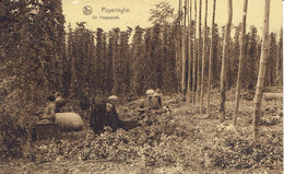 Cpa - De POPERINGHE -ramassage Du Houblon-pers.-écrite Voyagée -voir Dos  Timbre Et éditeur - Zonder Classificatie