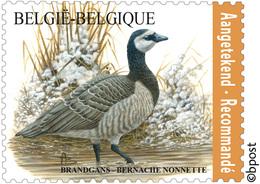 Belg. 2020 - La Bernache Nonnette ** (timbre Pour Recommandé)  - De Brandgans** Gratis Verzending (Envoi Gratuit) - Belgium