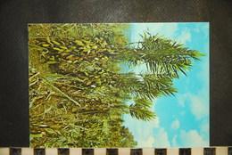 CP  LA REUNION, Plantation De Vanille, Agriculture, Plantes - Other