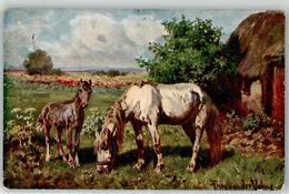53150967 - Pferd - Caballos
