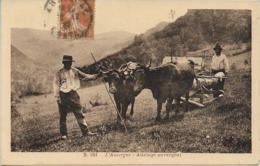 L'Auvergne - Attelage Auvergnat Transport Du Bois - France