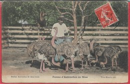 JOLI  LOT  # 79/100 – Petits Formats Variés Sous étuis - Cartes Postales