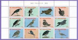 St. Maarten 2015.  Fauna. Birds - Curazao, Antillas Holandesas, Aruba