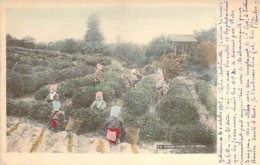 JAPAN JAPON Cathering Tea Leaves At UJI, YAMASHIRO Rammassage Des Feuilles De Thé En 1903 - Yokohama