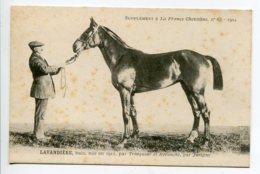 CHEVAUX Hippisme LAVANDIERE Cheval Baie Née 1911 Par Trinqueur Et Revanche Par Juvigny  LA FRANCE CHEVALINE  D01 2020 - Horses
