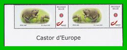 BUZIN - Castor D'Europe - OFAC - Papier Gommé - 1985-.. Vögel (Buzin)