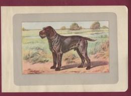 300120B - PHOTOGRAVURE EN COULEURS 1907 De MAHLER Peintre Animalier - Chasse Chien - GRIFFON D'ARRET A POIL DUR - Litografia