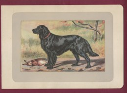 300120B - PHOTOGRAVURE EN COULEURS 1907 De MAHLER Peintre Animalier - Chasse Chien - LE RETRIEVER A POIL PLAT - Litografia