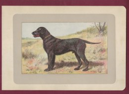 300120B - PHOTOGRAVURE EN COULEURS 1907 De MAHLER Peintre Animalier - Chasse Chien - LE RETRIEVER A POIL FRISE - Litografia