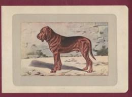 300120B - PHOTOGRAVURE EN COULEURS 1907 De MAHLER Peintre Animalier - Chasse Chien - CHIEN DE SAINT HUBERT BLOOD HOUND - Litografia