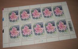 """België 3384** Gentse Floraliën VI - Rozen (With Scent Of Flowers , Met Bloemengeur/Aroma) Rosa """"Pink Iceberg"""" Pl 2 - Kleinbögen"""