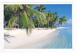 Maldives Heaven On Earth En 1993 VOIR Timbre Oiseau Sterna Dougallii - Maldives