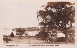 Sydney, Overlooking Farm Cove, Botanical Garden, The Rose Séries De Luxe, (P.5001) - Sydney