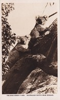 Australian Native Bear (Koalas)  The Rose Séries De Luxe, (P.4393) - Australia