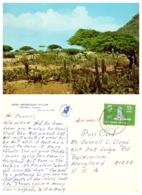Divi Divi Country, Aruba, Netherlands Antilles - Aruba