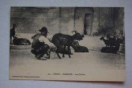 CORSE.  AJACCIO  Les Chèvres - Ajaccio