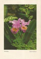 LAELLO - CATTLEYA  ORCHIDEE (3) - Fiori