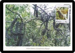 Portugal 2019 Postal Máximo Alfarrobeira Ceratonia Siliqua Maximum Maxicard Maxi Alfarroba Caroubier Carob Algarrobo - Bäume