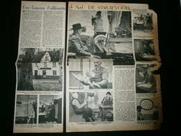 LEUVEN: Folklore: De Struifvogel (beschadigd Aan De Zijkant) - Documents Historiques