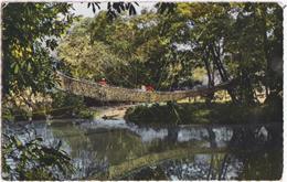 L\'Afrique En Couleurs - Pont De Lianes - Stamped In Matadi - Congo Belge - Autres