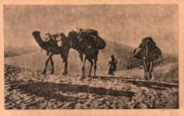 CPA - SCENES Et TYPES - CHAMEAUX Dans Les Dunes (CARAVANE De NOMADES) ... Edition EPA (Franchise Militaire) - Plaatsen
