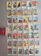 JEU DES 7 FAMILLES ANIMAUX SAUVAGES 42 CARTES - Cartes à Jouer Classiques