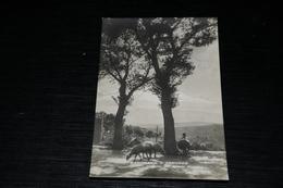 10030          PANORAMA D'ABRUZZO, VEDUTA DEL MONTE MAIELLA / ANIMATA - Italy