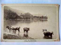 Photo Ancienne Format Cabinet - Lac Du Bourget - Abbaye De Hautecombe - Vaches - Photo Desgranges, AIX-LES-BAINS - TBE - Luoghi