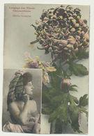 Langage Des Fleurs  - Chrysanthème  - Edition Bergeret - Bergeret