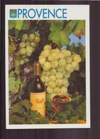 LE ROSE DE PROVENCE - Vines