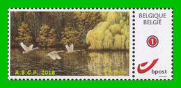 BUZIN - Cygne Tuberculé / Knobbelzwaan - ABCP - 1985-.. Vögel (Buzin)