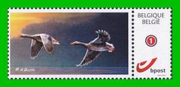 BUZIN - Oie Cendrée / Grauwe Ganzen - SPAB - 1985-.. Vögel (Buzin)