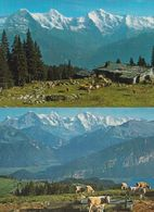 Beatenberg Cattle Cows Mountains 2x 1970s Switzerland Swiss Postcard S - Unclassified