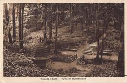 Trebnitz, Trzebnica – Im Buchenwald, 1930 - Schlesien