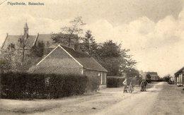Boisschot Pijpelheide - Belgique