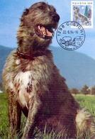 HELVETIA CELIGNY IRISH WOLFHOUND   MAXIMUM   POST CARD  (GENN201471) - Cani