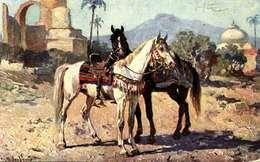Animaux & Faune > Chevaux     /  LOT  3033 - Cavalli