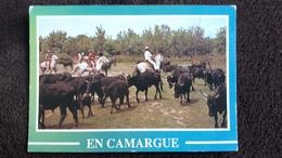 CPSM CHEVAL CHEVAUX CAMARGUE MANADE DE TAUREAUX CAMARGUAIS ED SL CLICHE AUBANEL - Horses