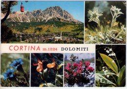 Fiori Delle Dolomiti. Cortina (Bl). Multivisione. VG. - Fiori