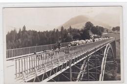Charmey, Troupeau De Vaches Et Chèvres Sur Le Pont Du Javroz. Gros Plan. Kühe, Ziegen / Cows, Goats - FR Fribourg