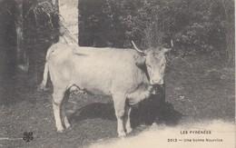 LES PYRENEES: Une Bonne Nourrice (vache) - Aquitaine