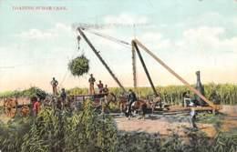 USA - Loading Sugar Cane - Vereinigte Staaten