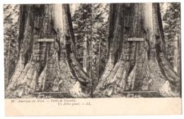 CPA  Stéréoscopique - ETATS UNIS - 21. Vallée De Yosemite. Un Arbre Géant- LL - Estereoscópicas